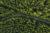 Verantwortung Klimaschutz Luftbild Wald (copyight: istock.com/rclassenlayouts)